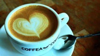 Conheça as duas principais espécies de café: arábica e robusta